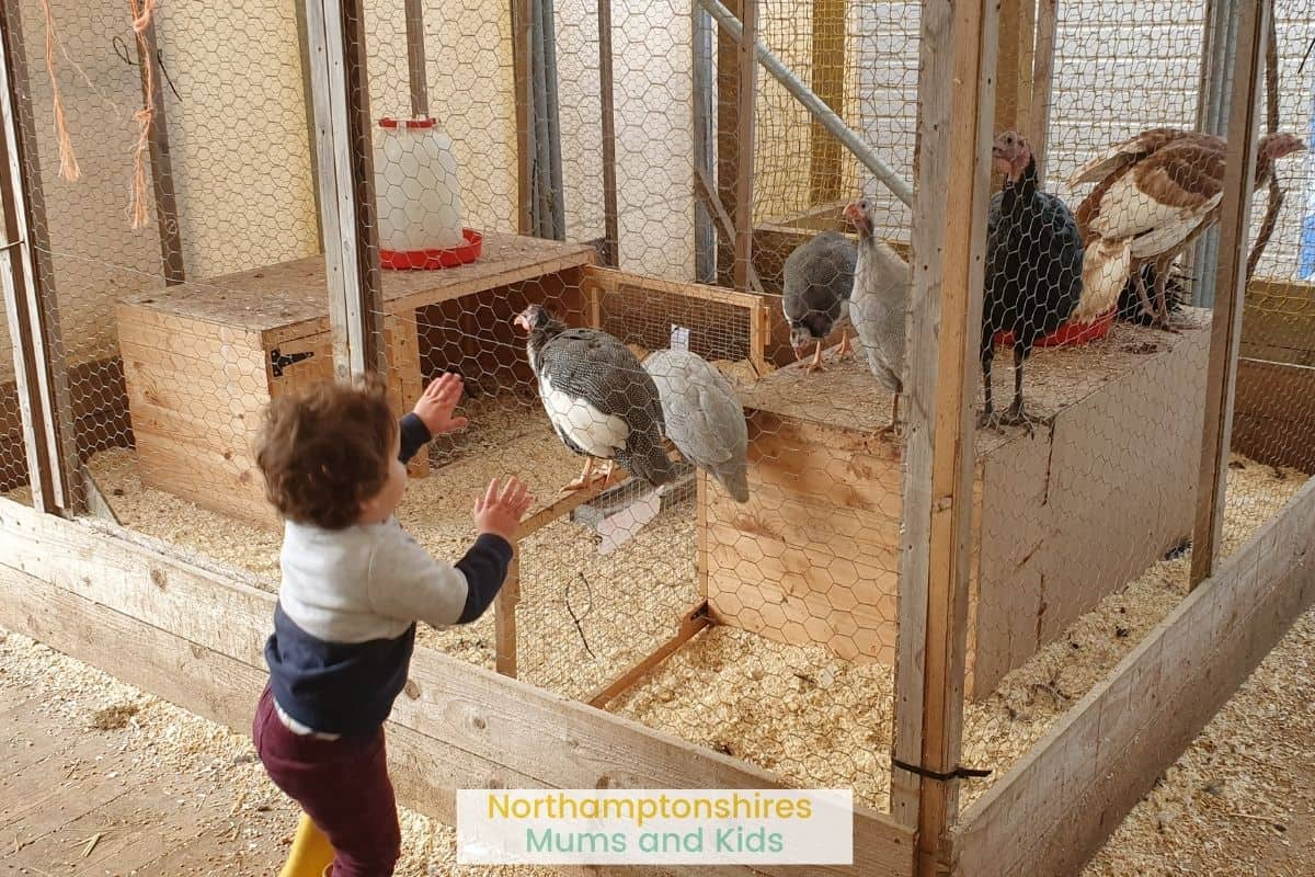 Mini Meadows Farm is the perfect place to get up close to animals and feed them. There is also a great indoor play area.