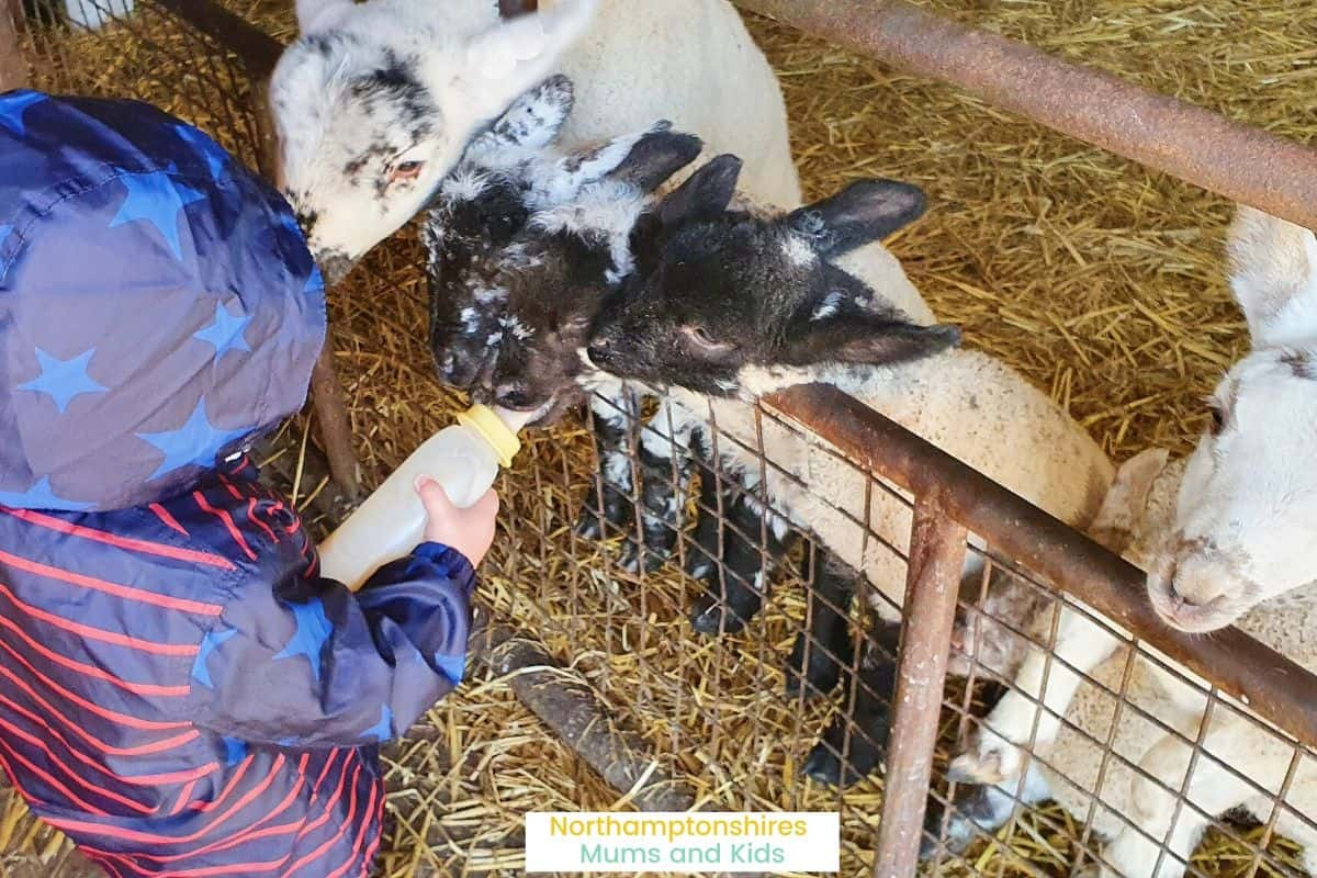 Bliss Lane Farm in Flore, is a small farm where you can bottle feed lambs, feed the sheep and end with a cup of tea and slice of cake. For more reviews of places to take the kids in Northamptonshire check out www.northamptonshiremumsandkids.co.uk