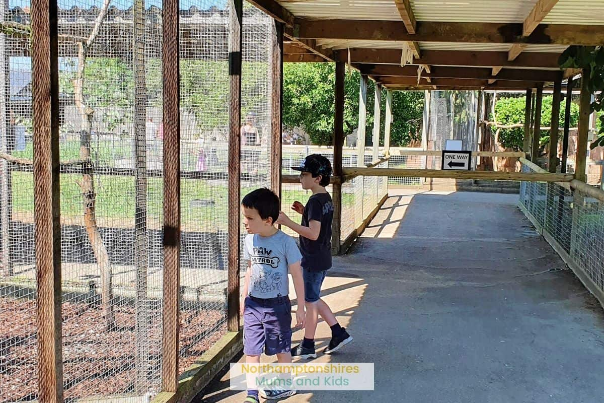 Hamerton Zoo is an ideal family day out for families. There are small and big animals including a white tiger, bears and flamingos. For more local reviews check out www.northamptonshiremumsandkids.co.uk