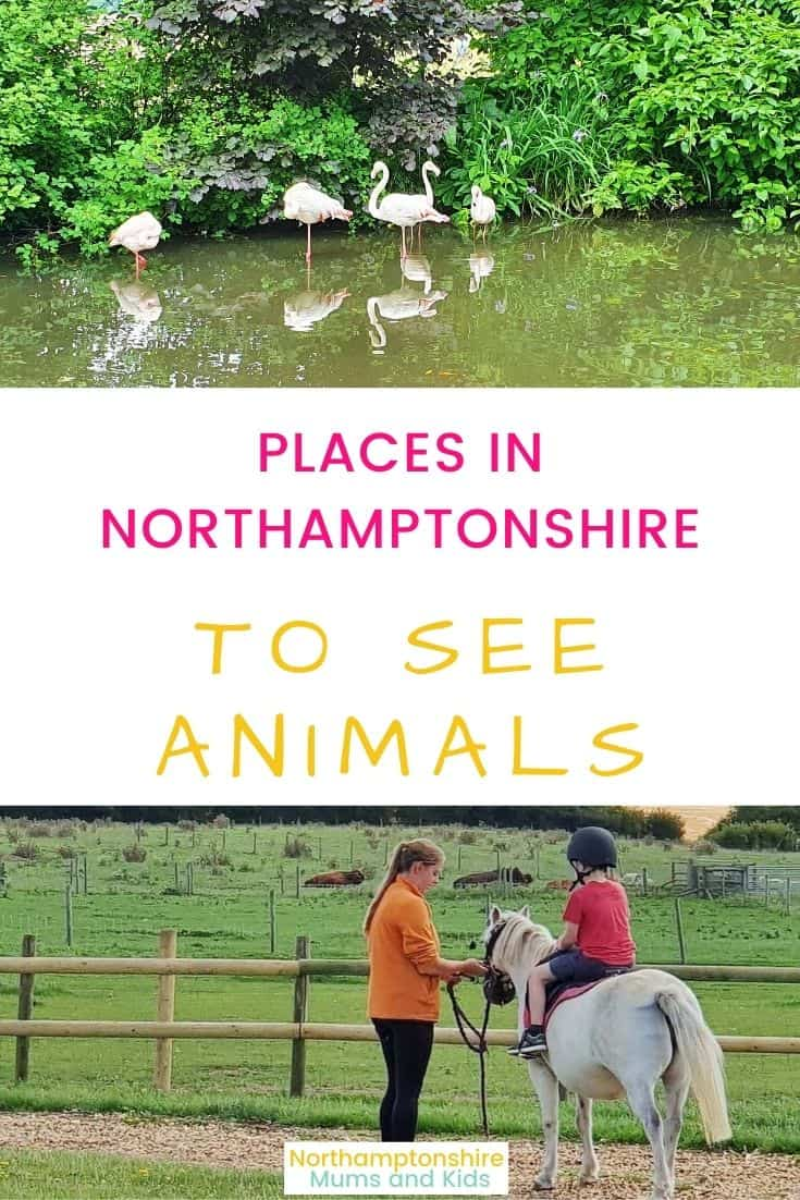 Places In Northamptonshire To See Animals