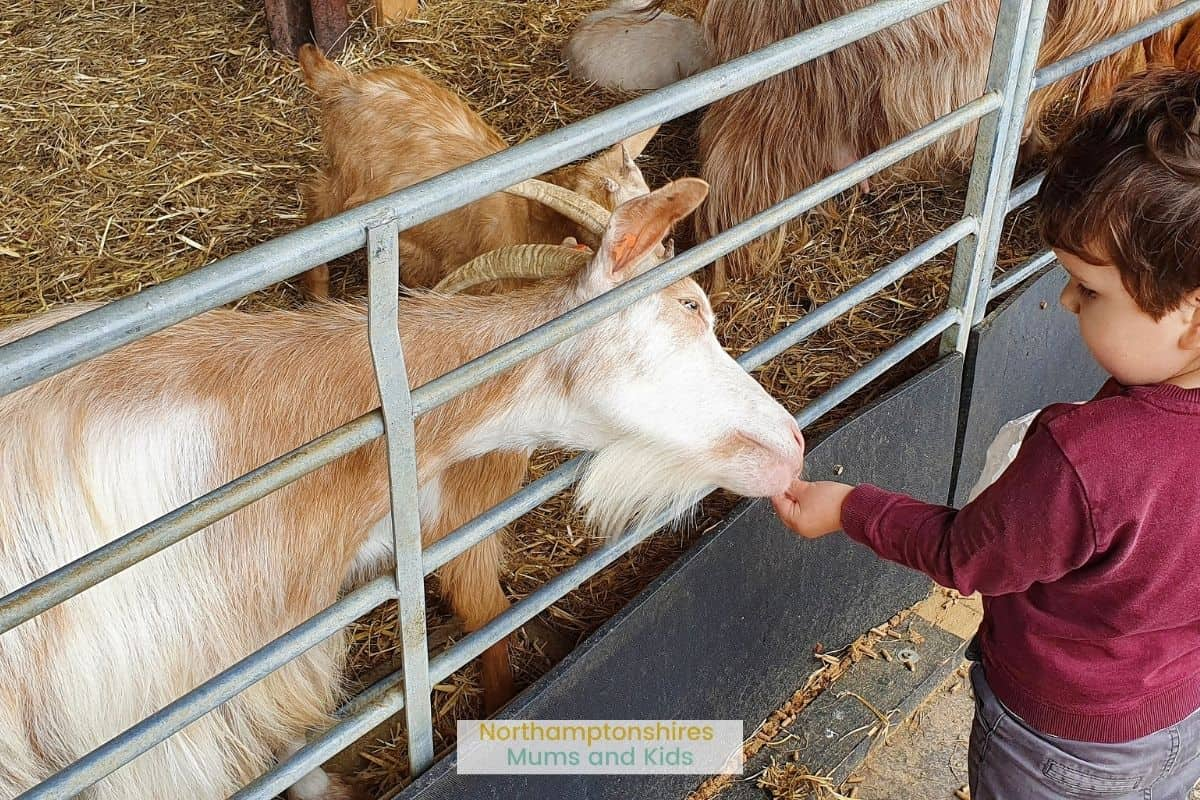 Mead Open Farm is just under an hour away from Northampton and is great for kids to see animals, do some adventurous climbing or go-karting! For more ideas of things to do in and around Northants check out www.northamptonshiremumsandkids.co.uk