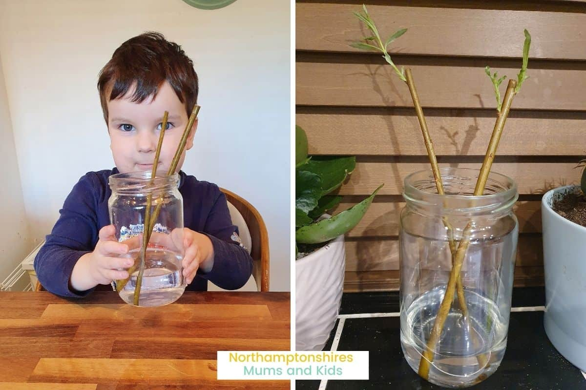 Willow wands. These came in our latest baking kit and are so easy to grow! www.northamptonshiremumsandkids.co.uk
