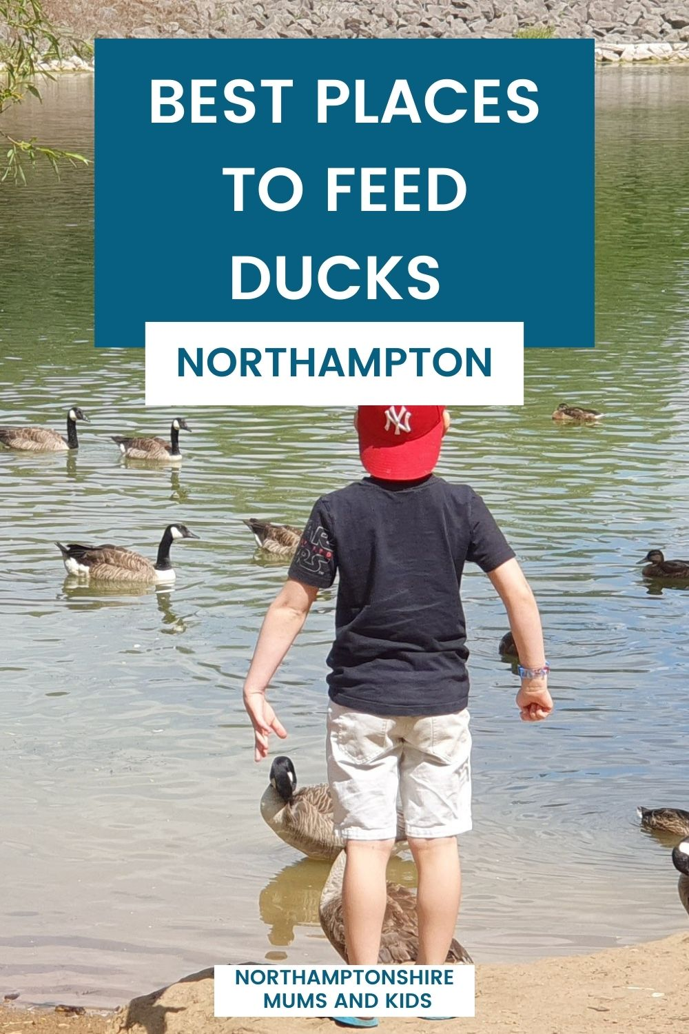 Best Places To Feed Ducks In Northamptonshire
