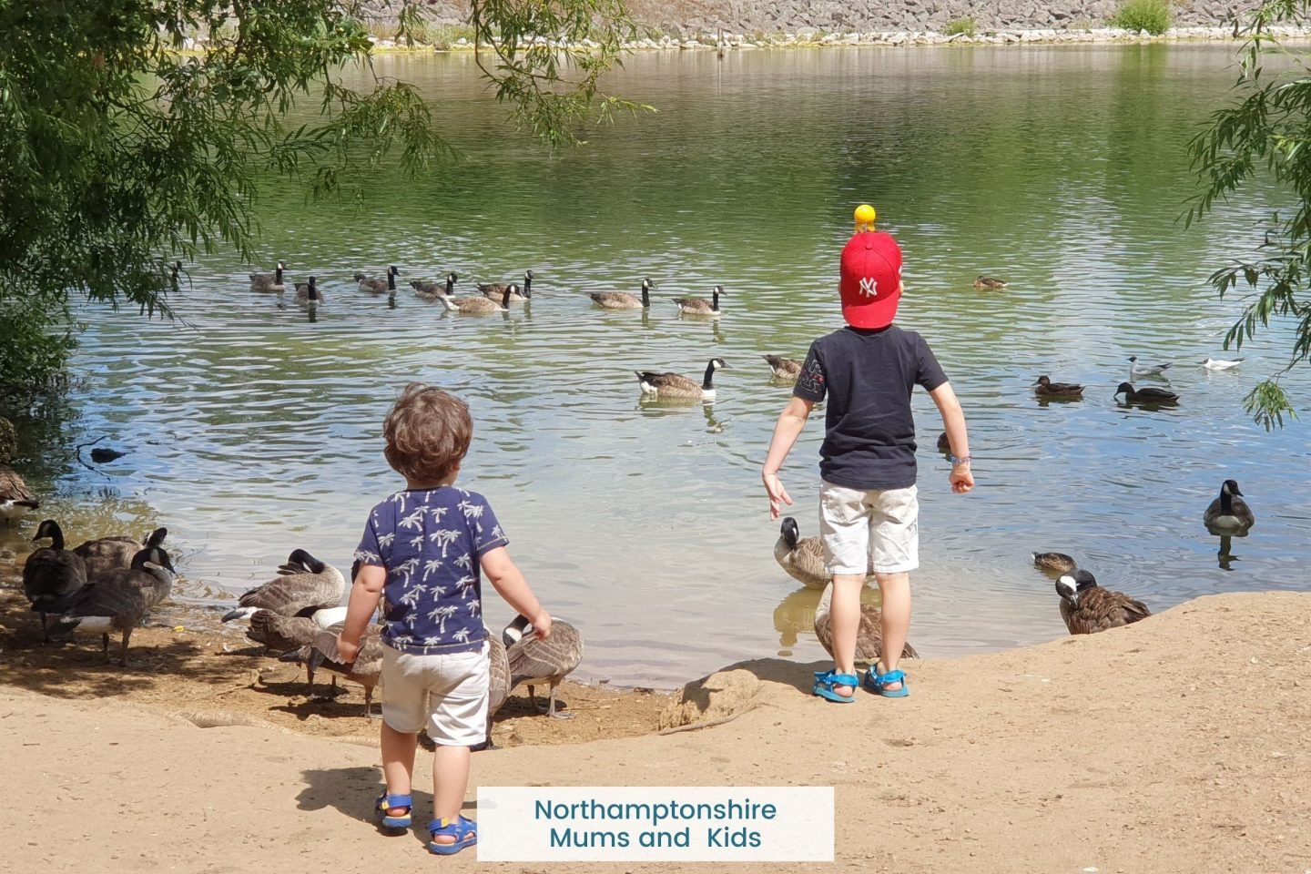 Where to feed ducks in Northants plus, can ducks eat bread? What should I feed ducks? What is a good duck food?