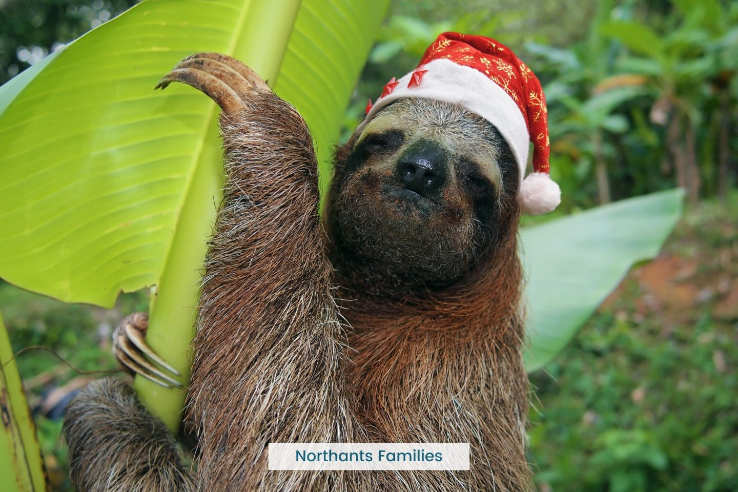 Christmas Events at Whipsnade Zoo