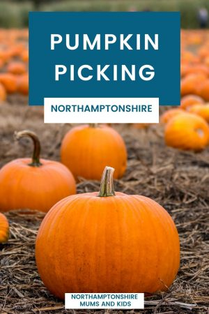 We are lucky that we have so many options of where we can go pumpkin picking in Northamptonshire, here is a list of all the places for 2021