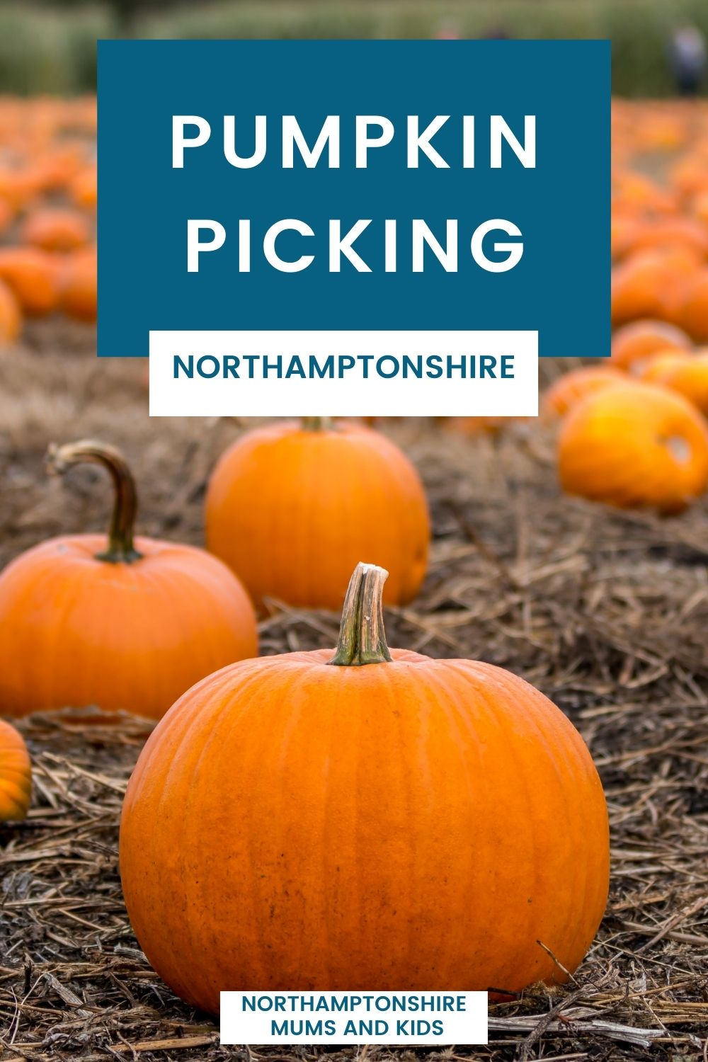Where To Go Pumpkin Picking In Northamptonshire